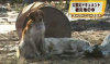 В Японии верный пес спас своего друга
